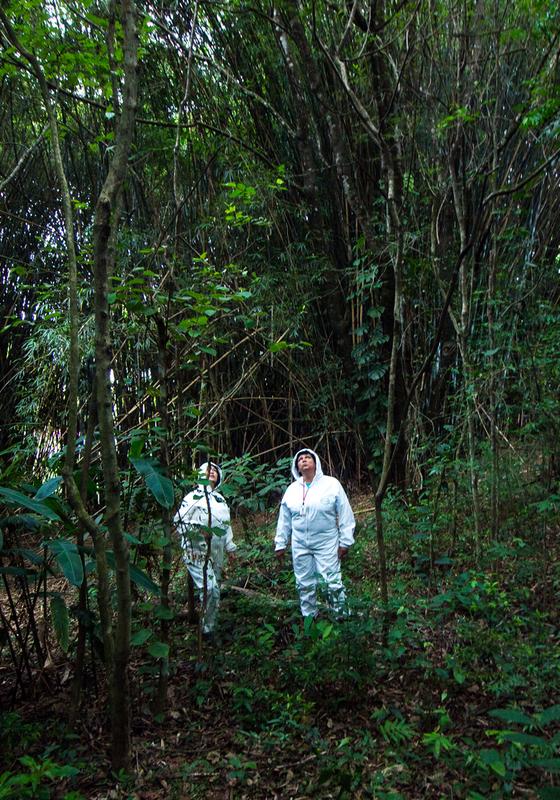 Agertes do centro de zoonoses de Jundiaí  fazer vistoria em mata urbana da regiao a procura de macacos mortos (Foto:  Rogério Cassimiro/ÉPOCA)