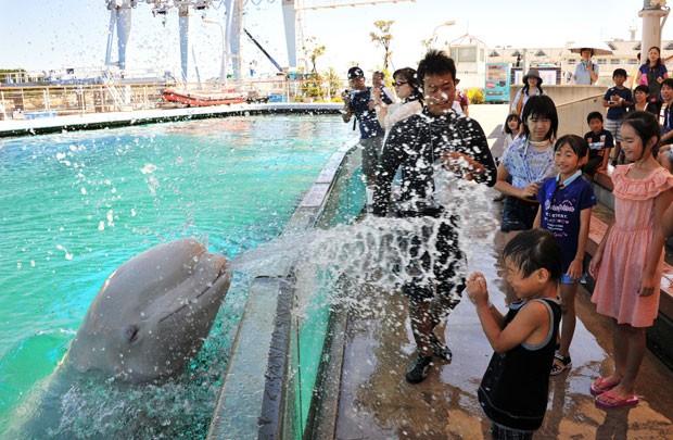Uma baleia-branca borrifou água em uma criança durante uma apresentação no aquário Hakkeijima, em Yokohama, no Japão. A temperatura em Tóquio chegou aos 35º C , nesta quarta-feira (6) (Foto: Yoshikazu Tsuno/AFP)