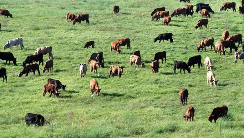 agricultura_pasto_silagem (Foto: Robispierre Giuliani/Ed. Globo)