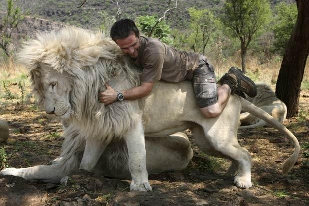 Kevin Richardson se considera um  'encantador' de leões. E quem o vê ao lado do grande predador em um parque de preservação próximo a Joanesburgo, na África do Sul, fica boquiaberto com a amizade que ele mantém com os leões (Foto:  Denis Farrell/AP)