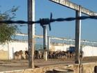 ONG denuncia que jumentos retirados das ruas estão passando fome no PI