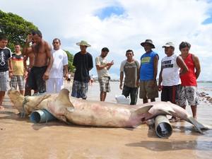 Tubarão martelo é pescado no Litoral Sul da Paraíba. (Foto: Walter Paparazzo/G1)