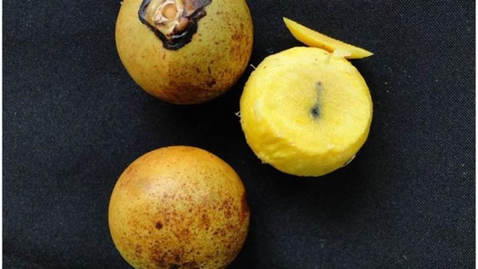Óleo usado na produção de biodiesel é extraído da polpa do coco da macaúba  (Foto: Divulgação)