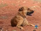 Cães são encontrados mortos e polícia suspeita de envenenamento