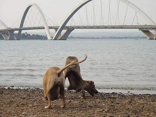 O casal de cães brincando às margens do Lago Paranoá, em Brasília (Foto: Facebook/Reprodução)