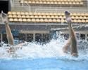 Desafio Olímpico: dueto tenta ficar o máximo sem respirar em coreografia
