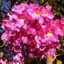 Árvores, arbustos, flores e frutos (Lucimara Aparecida Silva/Você no TG)
