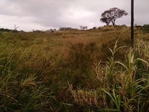 Corpo foi encontrado em matagal (Foto: Corpo de Bombeiros/Divulgação)