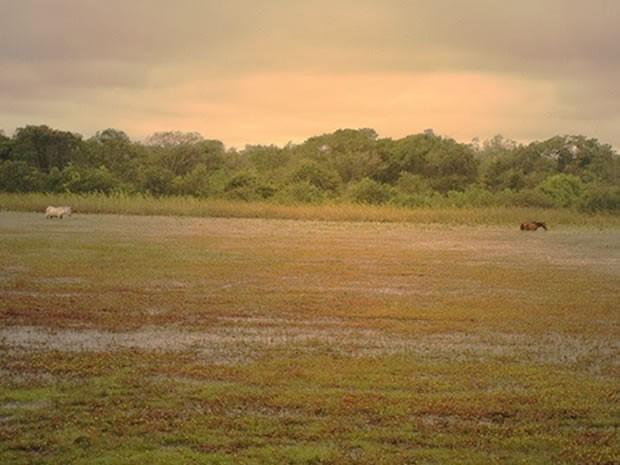 Cavalos pastam em região de área alagada do Pantanal (Foto: Stephanie Molkenthin / Arquivo pessoal)