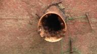 Produtores lutam pela conservação das abelhas para preservação da biodiversidade