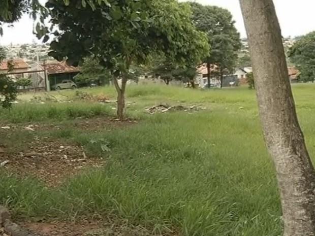 Prefeitura de Marília deve tomar medidas contra o mosquito da dengue (Foto: Reprodução / TV TEM)