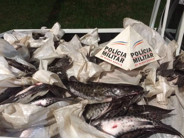 Foram apreendidos quase 400 quilos de pescado em Patrocínio (Foto: Polícia Militar/Divulgação)