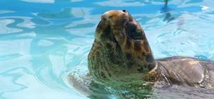 Tamar realiza conscientização e educação ambiental de pescadores para preservação de tartarugas (Spry Vídeo/Divulgação)