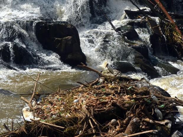 Garrafas pet se acumulam em meio às pedras do Rio Piracicaba na manhã desta quinta-feira (9). A imagem mostra que o lixo está parado no rio por conta dos galhos que há ali. Algumas aves ficam por perto em busca de comida. A poluição pode ser notada do Par (Foto: Leon Botão/G1)