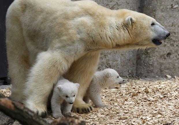 A mãe dos ursinhos, Giovanna, também aproveitou para brincar com os filhotes (Foto: Michael Dalder/Reuters)