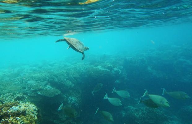 Recife de corais na Austrália (Foto: Mark Kolbe/Getty Images)