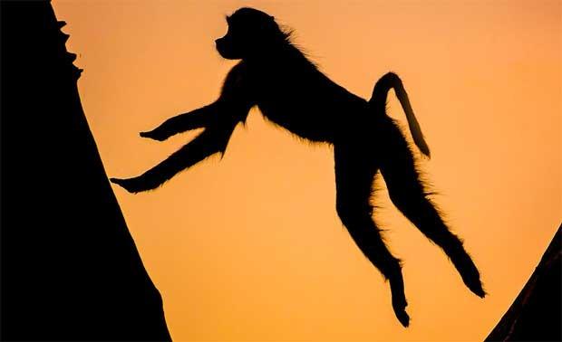 Cremer escolheu as primeiras horas da manhã e o entardecer para conseguir flagrar apenas as sombras dos animais com o belo céu africano ao fundo (Foto: Caters)