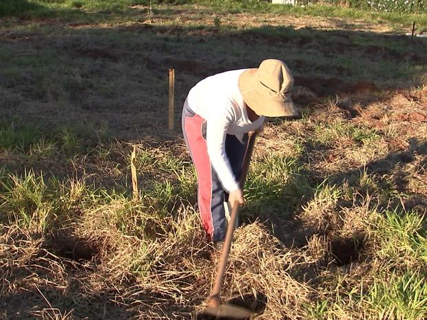 Método não usa agrotóxico e busca recriar a vegetação nativa (Foto: Reprodução/ TV TEM)