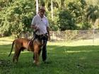 Conheça o processo para conseguir o certificado de pedigree para o seu pet