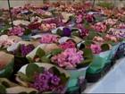 Exposição de flores de Holambra reúne 200 espécies em Divinópolis