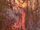 Fogo se alastra por mata e atinge Reserva de Sooretama, no ES