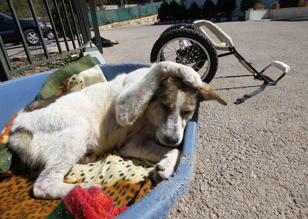 Cachorro ficou internado por 2 anos até voltar a caminhar (Foto: Ali Jarekji/Reuters)