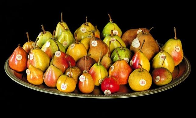 Acervo de 1.021 frutas de cera e plástico