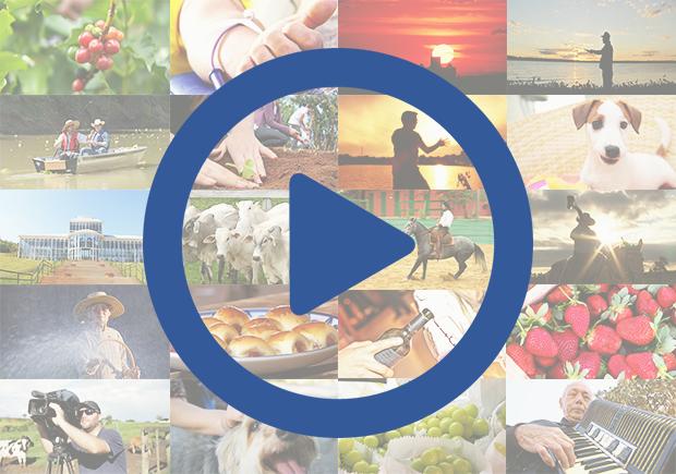Mosaico Vídeos TV TEM (Foto: Reprodução/TV TEM)