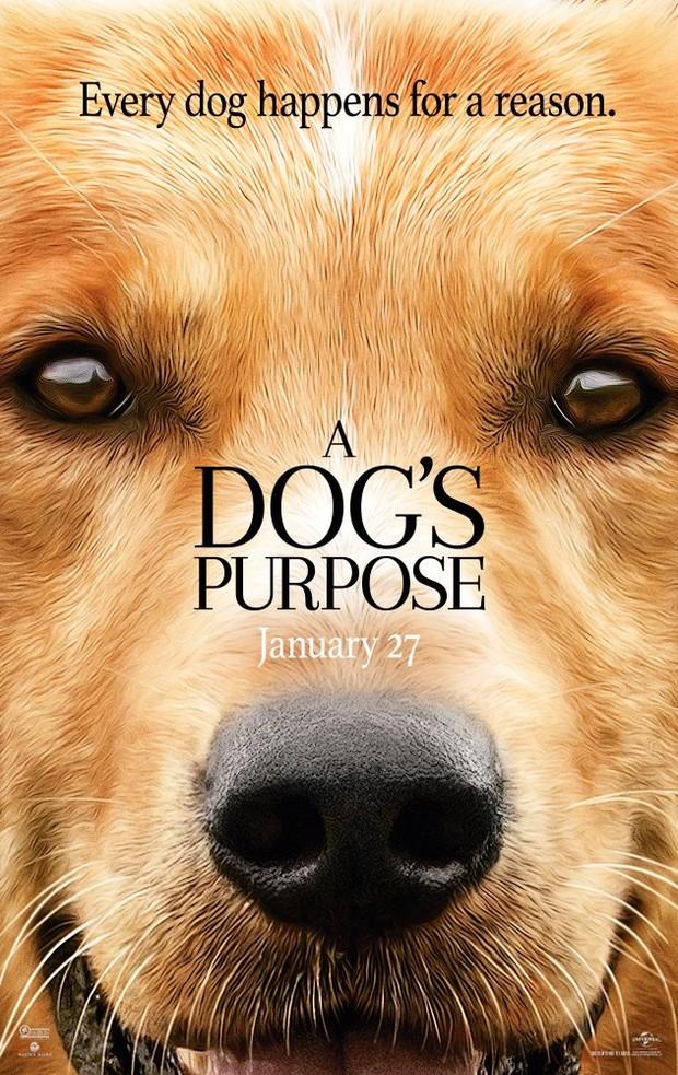 Cartaz do filme Quatro Vidas de Um Cachorro (Foto: Dilvulgação/ IMDB)