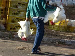 População ajuda a recolher animais da rua (Foto: Marquinhos Luiz/Visão Notícias)