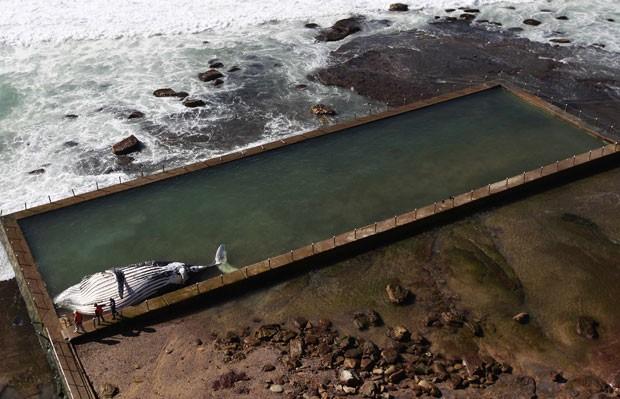 O animal, que parece estar morto há vários dias, foi levado pelas ondas ao local durante a maré cheia, à noite. (Foto: Daniel Muñoz/Reuters)