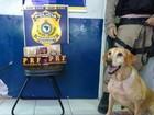 Cachorro encontra 10kg de maconha escondida em ônibus interestadual