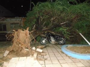Árvore atinge motocicleta em Ouricuri, PE (Foto: José Cariri de Lima/ Arquivo pessoal)