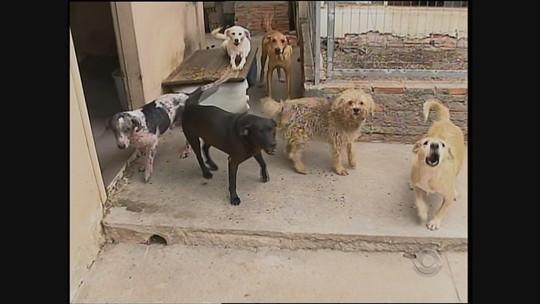 Projeto em SC propõe doação de R$ 1 em conta para castração de animais