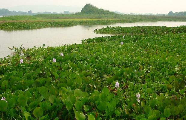 Áreas alagadas do Pantanal (Foto: Divulgação/Bichos do Pantanal)