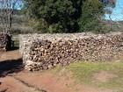 Polícia apreende mais de 1,5 mil árvores derrubadas em Imbituva