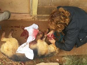 Cachorro atropelado precisou ser resgatado e terá pata amputada (Foto: Sheila Patresi/ Arquivo Pessoal)