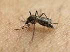Risco de contrair zika nos Jogos Paralímpicos continua baixo, diz OMS