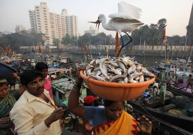 Garça foi flagrada roubando peixe de bacia. (Foto: Danish Siddiqui/Reuters)