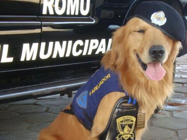 Cão Marley trabalhou 10 anos como cão farejador da Guarda Civil Municipal  (Foto: Arquivo pessoal/Juceil Batista Rodrigues)