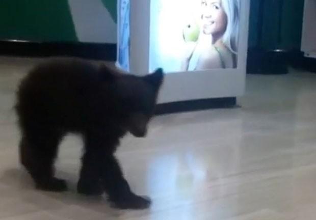 Autoridades acreditam que o ursinho tenha cerca de um mês de idade (Foto: Robin A. Bishop/AP)
