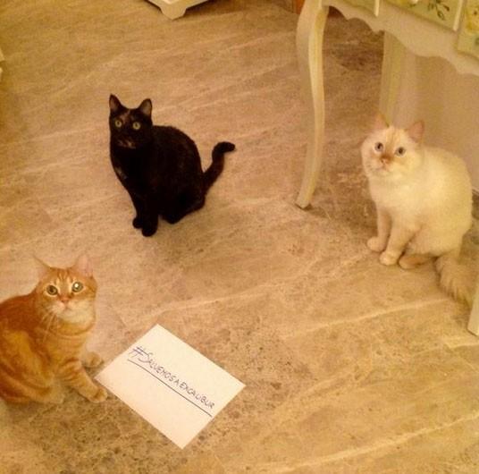 Usuária @SaraMcmarc postou foto de seus três gatos com a hashtag em favor do cão (Foto: Reprodução/Twitter/@SaraMcmarc)