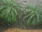 Chuvas fortes continuam em Mato Grosso do Sul no sábado, diz Inmet