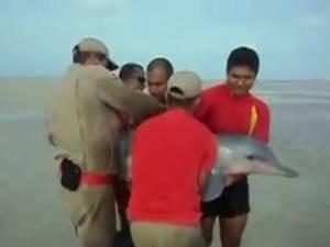 Imagens mostram resgate dos golfinhos (Foto: Reprodução/Corpo de Bombeiros)