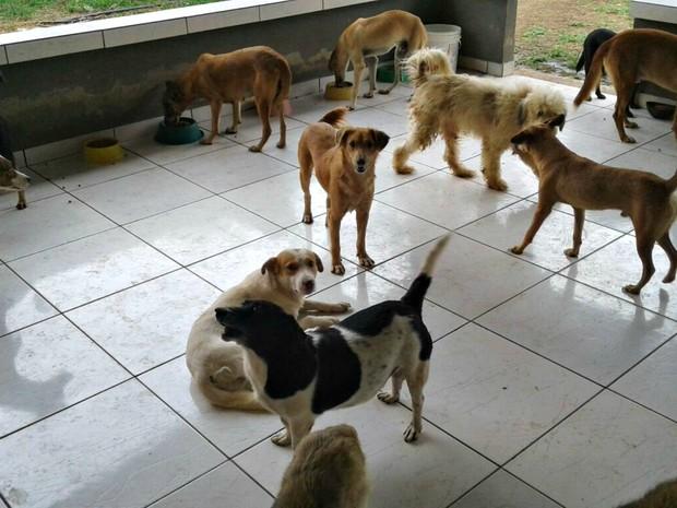 ONG ainda acolhe 30 animais em Cruzeiro do Sul  (Foto: Adelcimar Carvalho/G1)