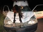 Motorista sobrevive após atropelar cavalo (Sessé Guimmas/MedeirosDiaDia)