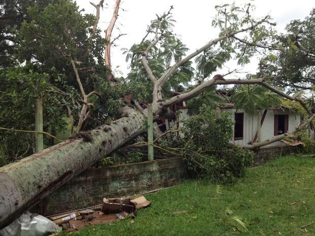 Árvore atingiu casa e caiu sobre o quarto do casal (Foto: Luciane Kohlmann/RBS TV)