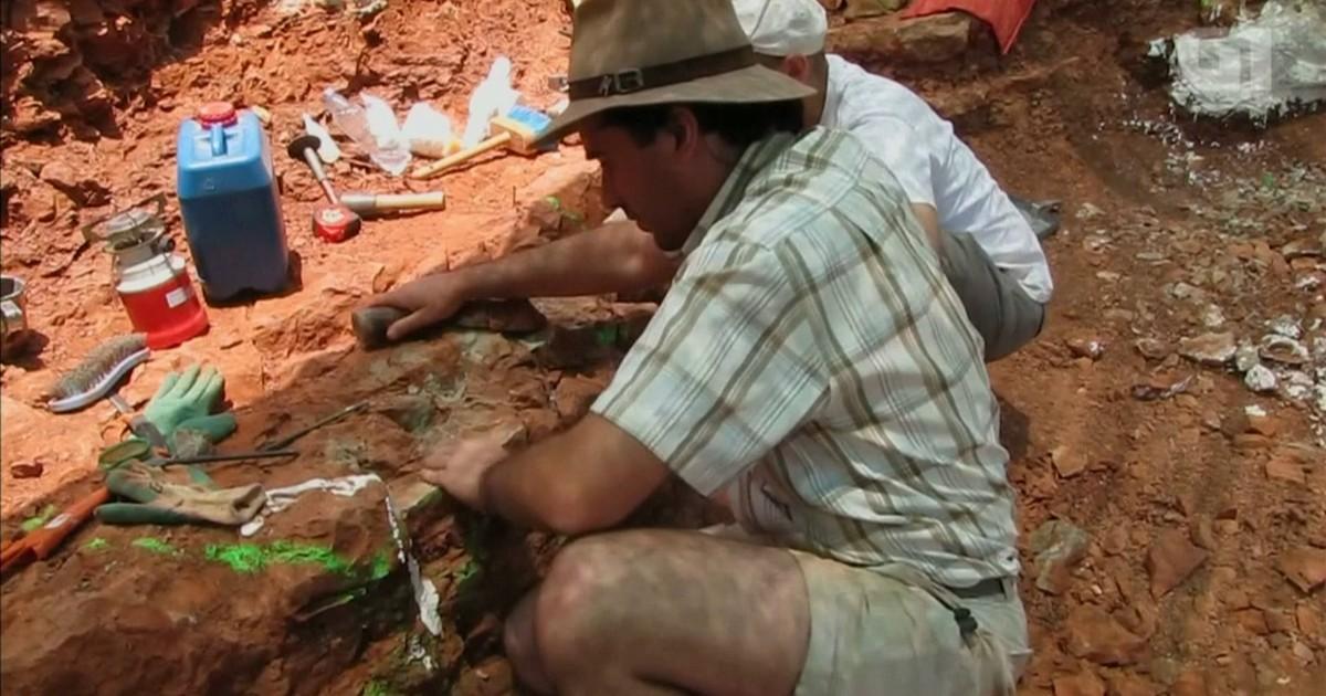 Fósseis de salamandra pré-histórica são descobertos em Portugal