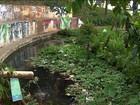 Limpeza de rios de SP dá os primeiros passos, diz a urbanista Linda Cox