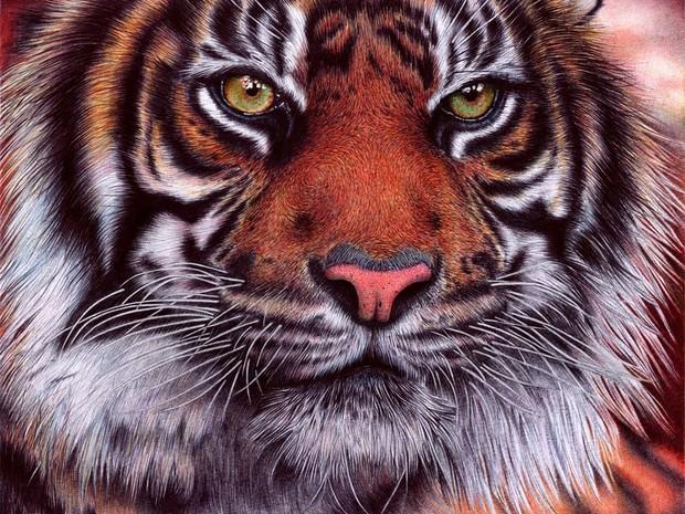 Desenho de tigre-de-sumatra feito com canetas esferográficas levou 20 horas para ficar pronto. (Foto: Reprodução)